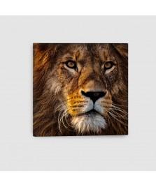 Leone - Quadro su tela - Quadrato
