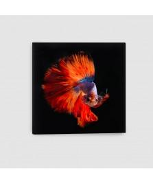 Pesce Combattente - Quadro su tela - Quadrato