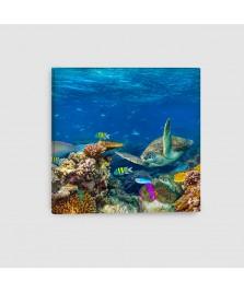 Pesci Tropicali - Quadro su tela - Quadrato