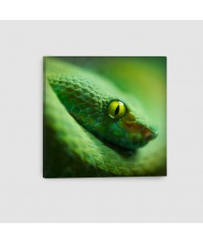 Serpente - Quadro su tela - Quadrato