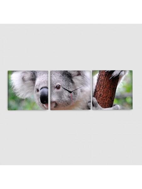 Koala - Quadro su tela - 3 Pannelli con orologio