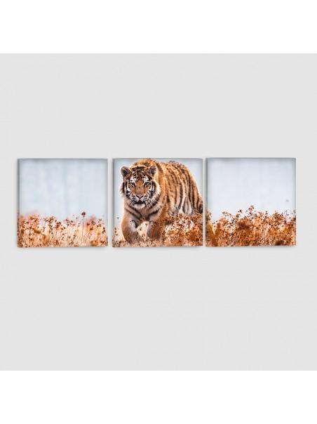 Tigre - Quadro su tela - 3 Pannelli